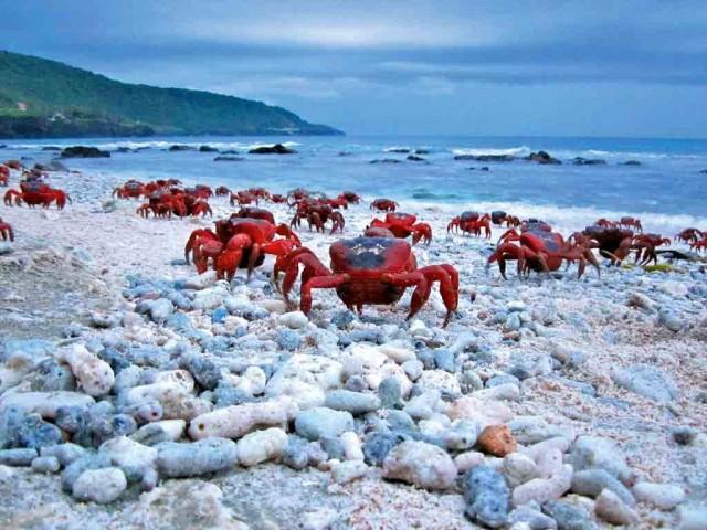 Christmas Island(AU)